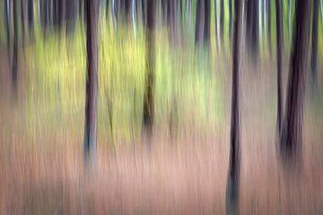 Creatieve verbeelding van bomen in het bos van Karin de Jonge