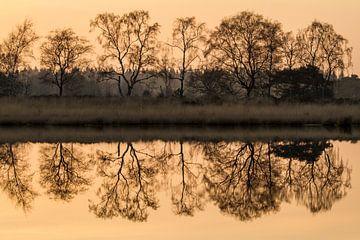Bomen in weerspiegeling Groote Heide van Easycopters