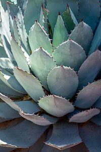Plant in Jardin Majorelle, Marrakech van