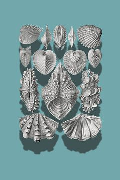 Vintage Shellfish Illustrations van Marja van den Hurk