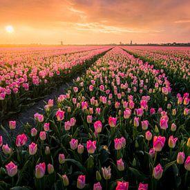 Hollandse Tulpenvelden van Martijn van der Nat