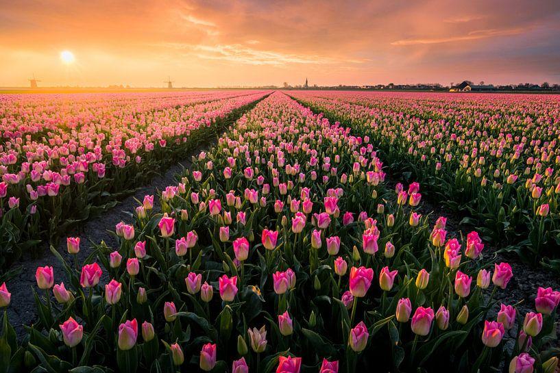 Niederländischen Blumenfelder von Martijn van der Nat