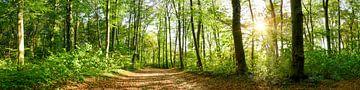 Chemin à travers la forêt sur Günter Albers