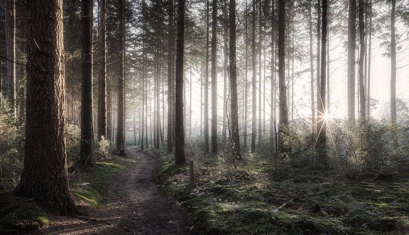 Forest sur Reinier Snijders