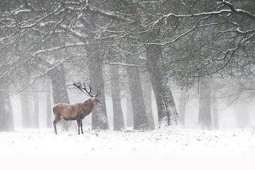 Rothirsch im Schnee von Albert Beukhof