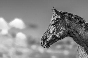 Porträt eines Pferdes auf dem Noorderleeg in Schwarz-Weiß von Harrie Muis