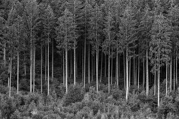 FOREST 01 van Tom Uhlenberg