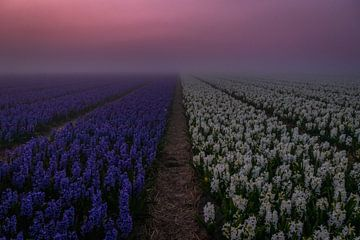 blue-white in the mist van Peter Heins