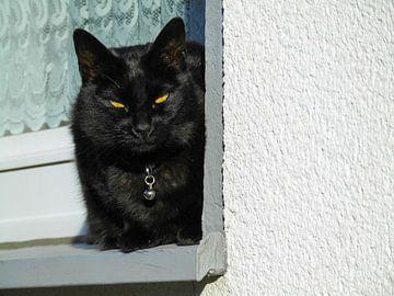 Katze 02 von Tomas S.