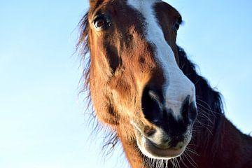 Close-up van een paard van T. Berrevoet