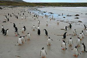 pinguïns op Pebble eiland