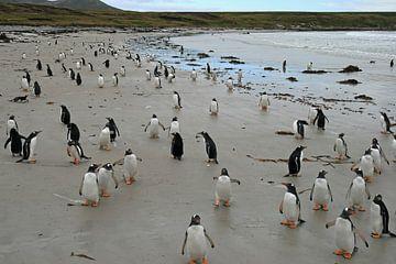 pinguïns op Pebble eiland sur Antwan Janssen