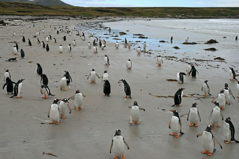 pinguïns op Pebble eiland van Antwan Janssen
