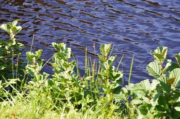 Libellen am Ufer von Susanne Seidel
