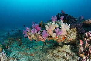 Rif met kleurrijke softkoralen