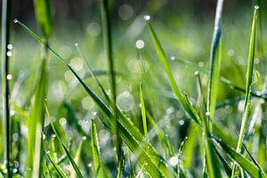 Dauwdruppels op gras van
