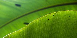 Tropisch blad