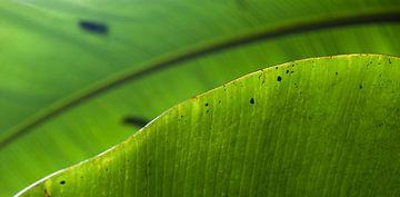 Tropisch blad van Martijn van Huffelen