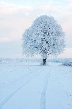 Koude boom II van