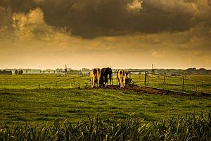 Kühe auf der Weide, wenn die Luft bedrohlich ist von nol ploegmakers