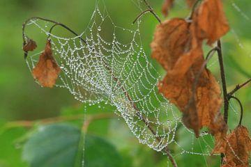 Spinnenweb van Martien Wassink