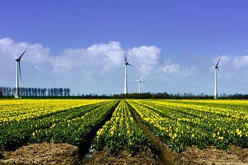 Tulpenveld met windmolens van Jos Reimering