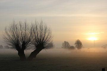 Knotwilg in mistige polder Oosterbeek. von Maarleveld Fotografie