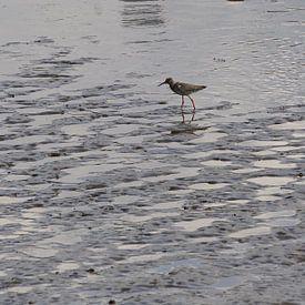 steltloper langs de rivier van joyce kool