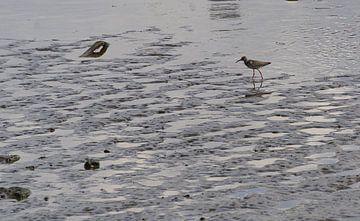 steltloper langs de rivier