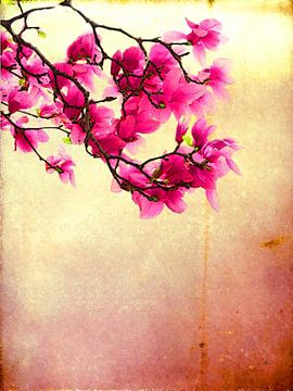 Tulp Magnolia van Dirk H. Wendt