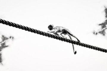 Visuelles Gleichgewicht von Liberty Ragazza Biesma