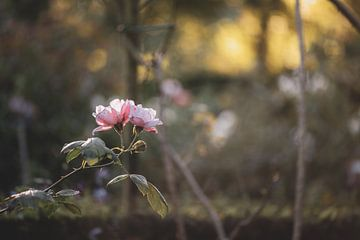 Blumen Teil 4 von Tania Perneel
