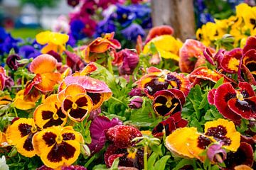 Kleurrijke Bloemen van dichtbij van John Ozguc