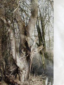 Tree Magic 11
