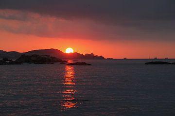 Unter der spanischen Sonne von Ylse Wynia