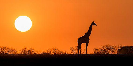 Afrikaanse zonsopkomst van Richard Guijt