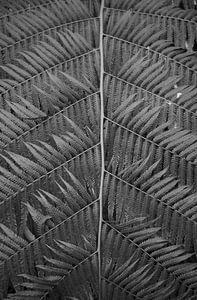 Lijnen van een plant in zwartwit van