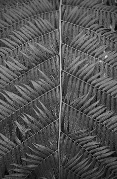 Lijnen van een plant in zwartwit van Anne van de Beek