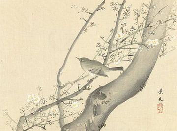 Vogeltje in boom met witte bloesem van Matsumura Keibun - 1892