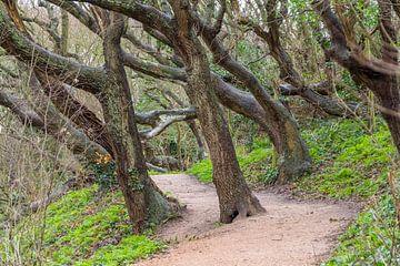 Pad en kromgetrokken bomen van Achim Prill