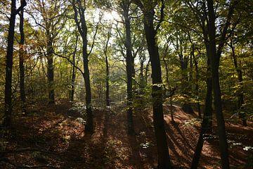Herfst von Anita van der Wiel