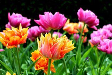 Frühlingsfarben von Renate Dohr