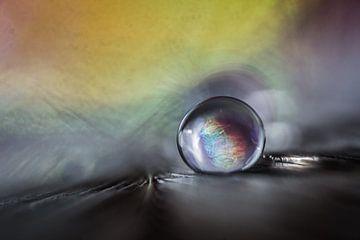 Wassertropfen auf einer Feder von Bert Nijholt