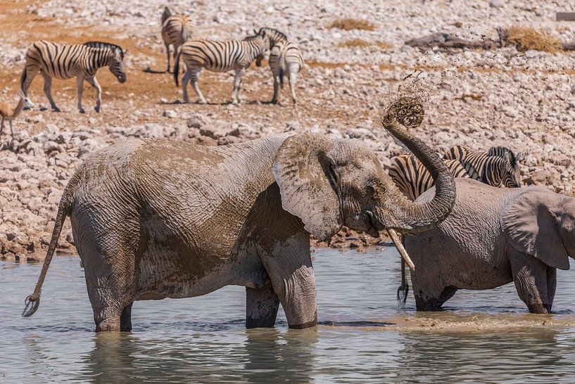Elefanten Familie van Felix Brönnimann