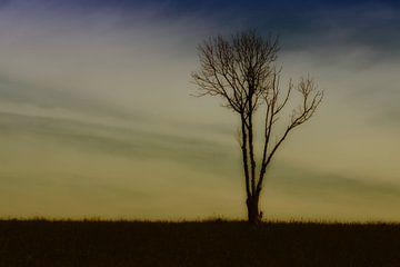 eenzame boom von Yvonne Blokland