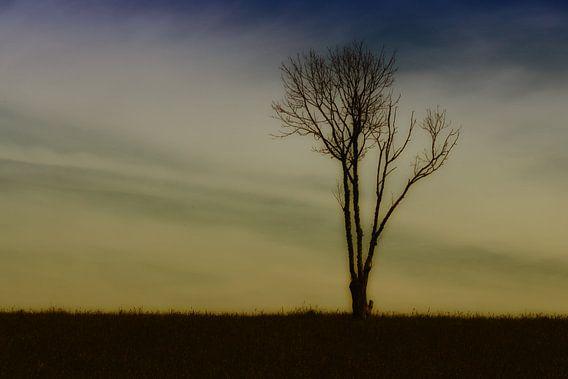 eenzame boom van Yvonne Blokland