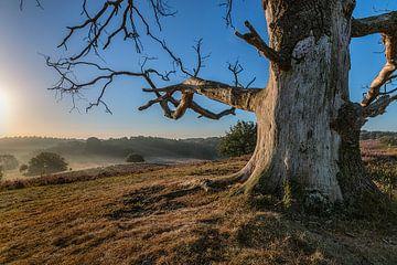 Posbank ( natuur ) von Henk Smit