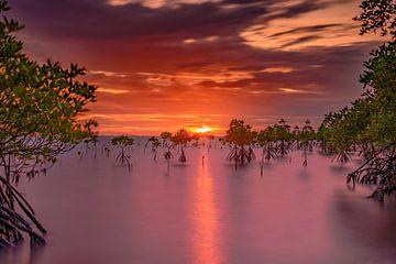 Mangrove sur Rogier Kwikkers