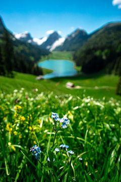 lenteachtig uitzicht op de Sämtiser See en de Appenzeller Alpen van Leo Schindzielorz
