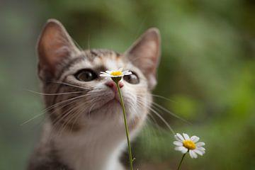 Poes en bloem van Mds foto